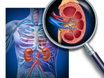 Concienciaciación  sobre cáncer de riñón