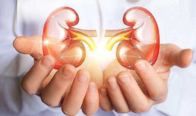 Medicamento para el cáncer podría ayudar a revertir el daño renal en el lupus