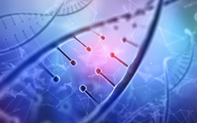 Estas son las células inmunitarias responsables del rechazo de los trasplantes